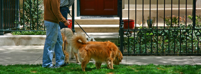 Chicago Dog Walker Service, Logan Square Dog Care Service, Chicago Dog Walk Company